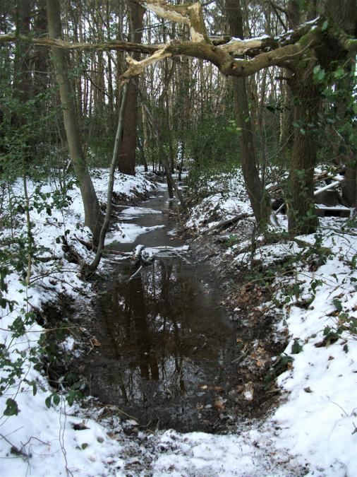 The ditch ... now a frozen swampy river!