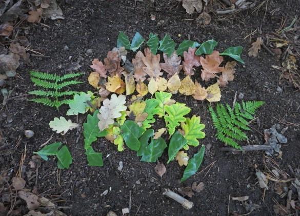 Autumn art on the forest floor