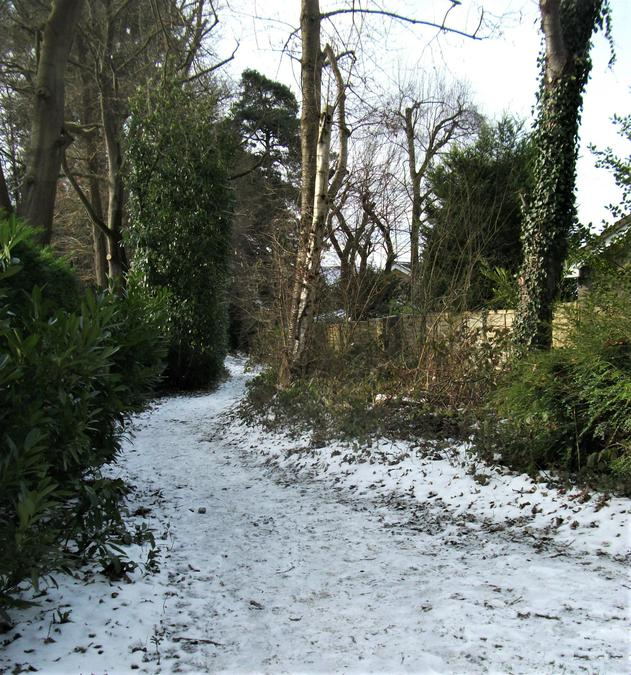 Snowy path into the woods