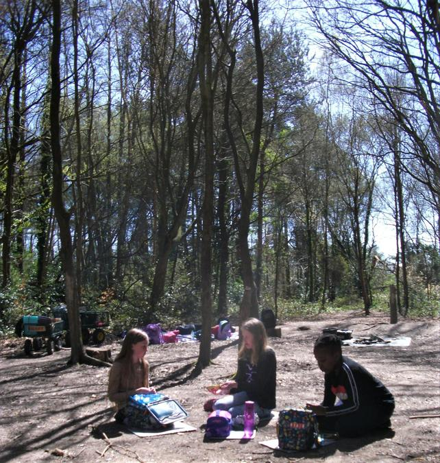 A chilled lunch in the forest sunshine