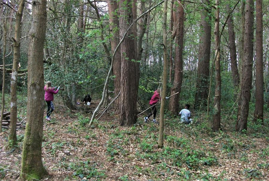 On the hunt for den materials out in the woods