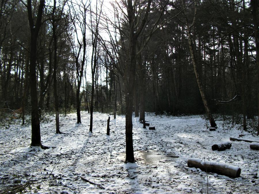 Winter sunshine shadows ... but no warmth here