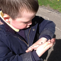 We found lots of ladybirds on our trees.