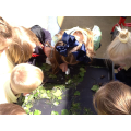 We loved watching the slimy snails!