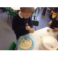 Ben used the pumpkin seeds in play based learning.