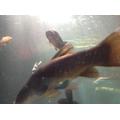 Fab fish