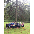 We found a monkey puzzle tree.