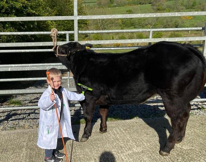 1st prize for best heifer is Harry