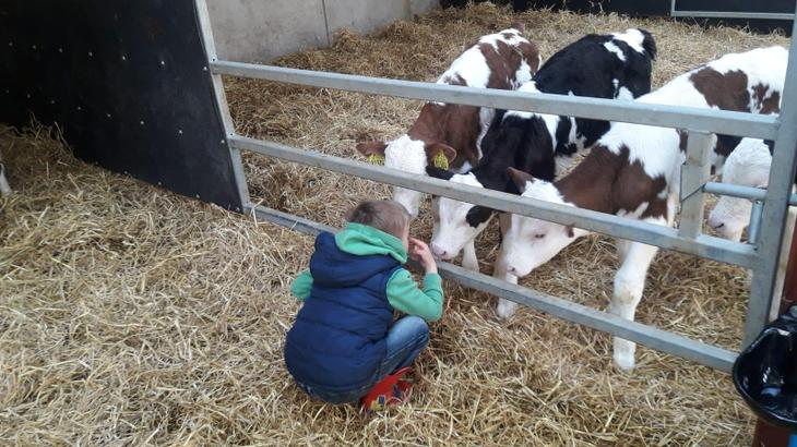 Cutest calves is awarded to Sam