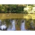 We fed the ducks