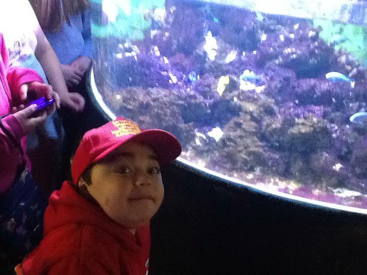 Finding Nemo/Dory