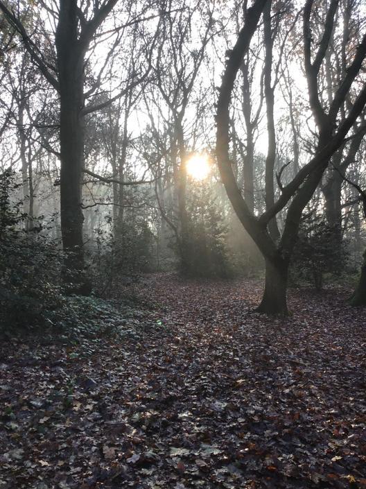 Capturing light at Cotmanhay woods