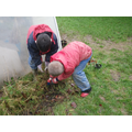 Weeding the wild flower bed