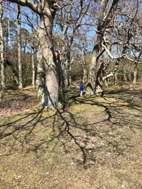 Trees make the most fantastic shadows!