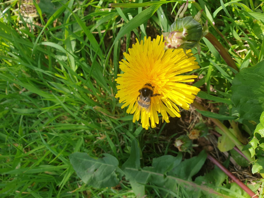 What do you think this bee is doing?