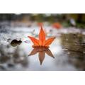 Single Leaf Reflection