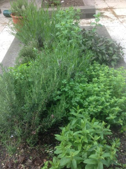 Our herb bed smells wonderful!