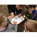 We worked together to find bugs.