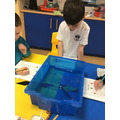 Do these objects float or sink?