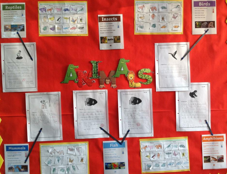 Yellow class has been learning facts about animals