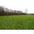 February 2021 Orchard