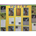 Poetry from Year 5/6 in Scott & Shackleton Classes