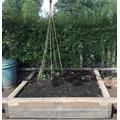 Mr Reincke has planted sweet peas.