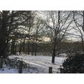 The snowy meadow