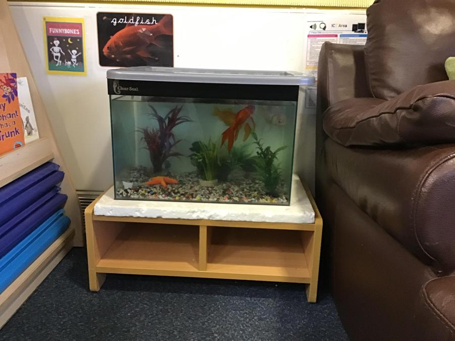 Our Nursery fish.