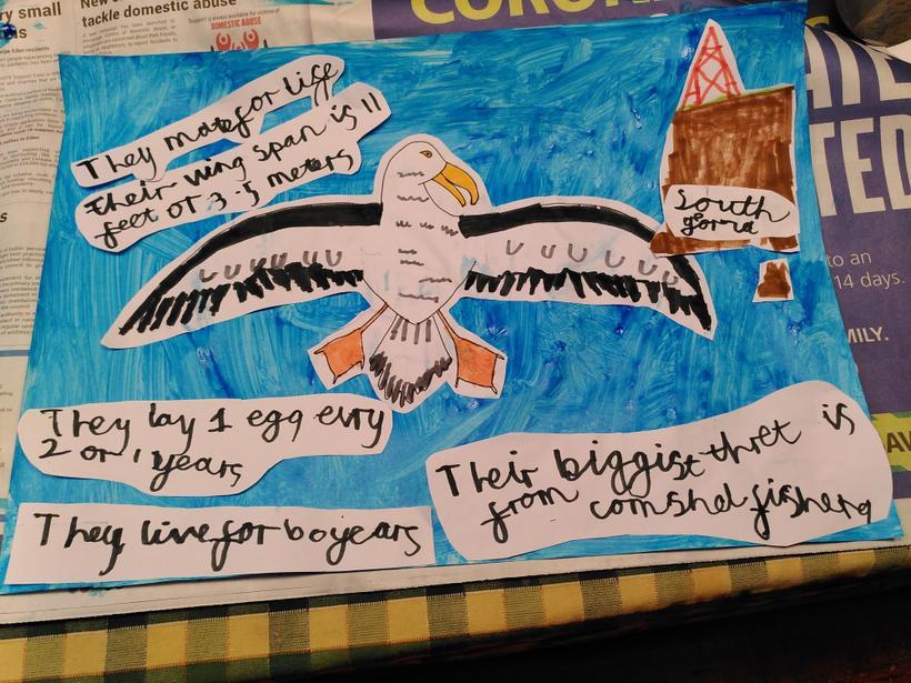 Reuben has been researching  albatrosses.