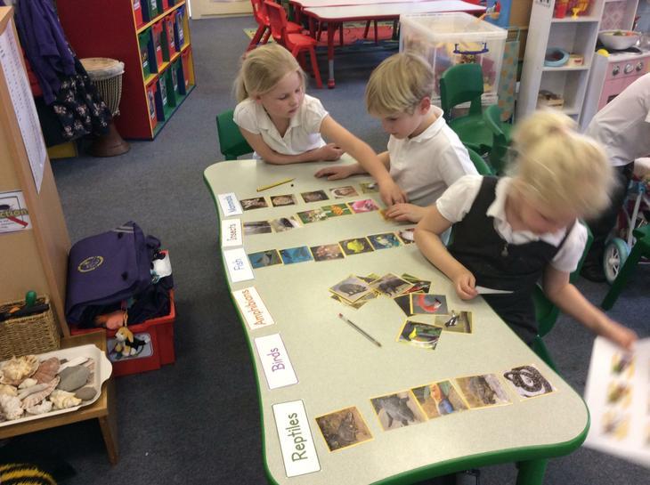 Sorting into animal groups.