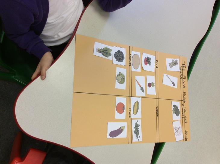 Y1 sorting the parts of vegetables we eat.