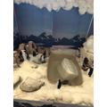 Edward's penguin enclosure