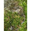 Describe the moss.