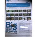 Harrison took part in the RSPB Big Garden Birdwatch