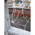 15th January 2021 - frozen spider web