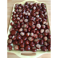 How many conkers can you see? What tree do conkers come from?