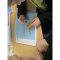 Being Mary Anning - excavating chocolate chips
