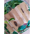 05/05/2021 Our caterpillar is now in his new home, ready to come out of his cocoon.
