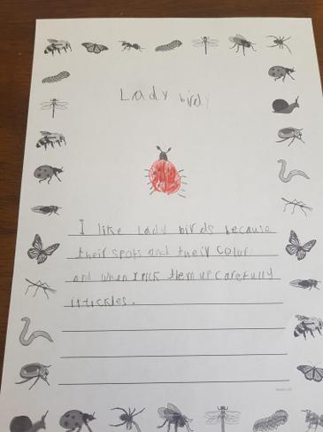 Aoife wrote a description of a Butterfly.