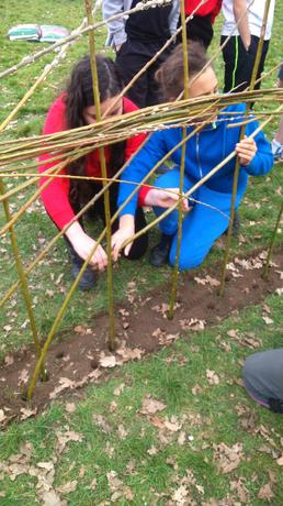 Weaving the willow fedge
