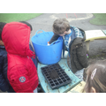 Forest School - Planting strawberries!