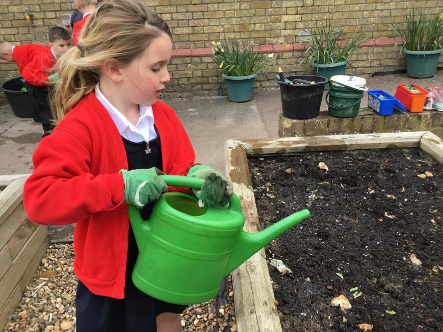 preparing for planting