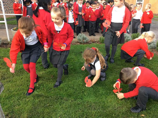 Poppies were planted outside in the school grounds