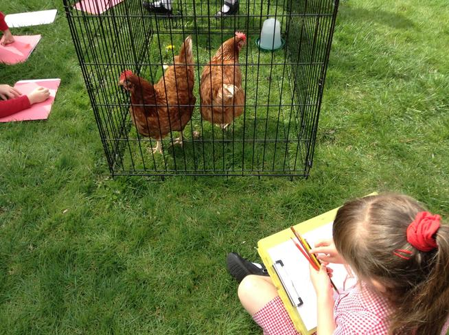 It was great to see a real little red hen