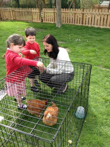 Mrs Cole brought her hens in for us to see