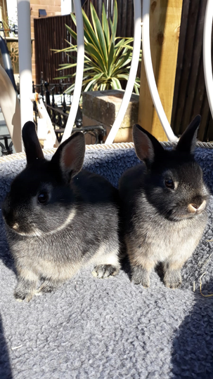 Soraya has got two new bunnies, Oreo and Clover!