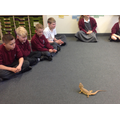Meeting the bearded dragons!