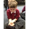 Holding stick insects