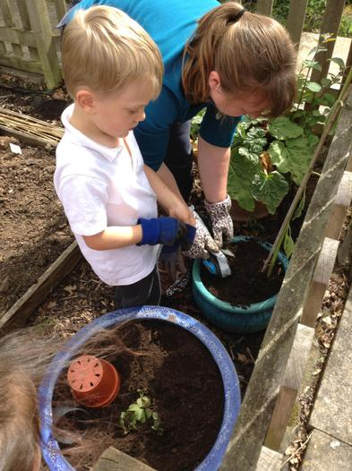 Planting vegetables to use in our school dinners.